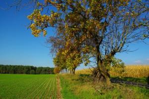 Baum Kontrolle Gutachten Potsdam & Brandenburg
